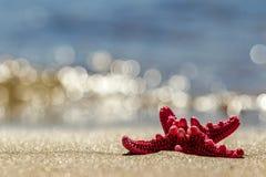 Étoiles de mer sur la plage Lumineux, rouge, cinq-aigu Sandy Beach B photo stock