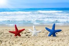 Étoiles de mer sur la plage pendant le quatrième juillet Image libre de droits