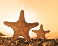 Étoiles de mer sur la plage Plage d'été Image stock