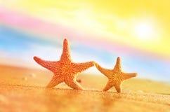 Étoiles de mer sur la plage Plage d'été Images stock