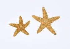 Étoiles de mer sur le fond blanc Image libre de droits