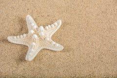 Étoiles de mer sur le fond de plage sablonneuse pour des vacances d'été et des vacances Images libres de droits