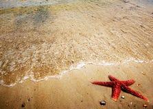 Étoiles de mer sur le sable Photographie stock libre de droits