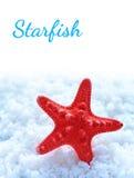 Étoiles de mer sur le sel de mer Photographie stock