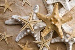 Étoiles de mer sur le vieux papier Photographie stock libre de droits