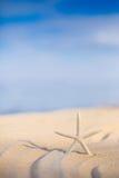 Étoiles de mer sur un sable de plage Photographie stock