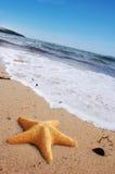 Étoiles de mer sur une plage Image libre de droits
