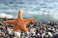 Étoiles de mer sur une plage ensoleillée Photographie stock