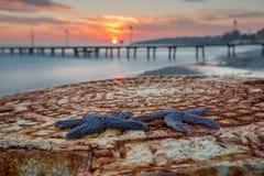Étoiles de mer Tekirdag, Turquie de coucher du soleil Photographie stock libre de droits