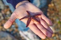 Étoiles de mer vivantes sur une paume Photo libre de droits