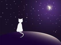 Étoiles de observation de chat seul Photos libres de droits