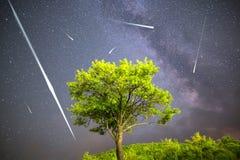 Étoiles filantes vertes de ciel nocturne de manière laiteuse d'arbre Photos stock