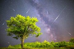 Étoiles filantes vertes de ciel nocturne de manière laiteuse d'arbre Photographie stock