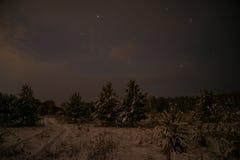 Étoiles impeccables de neige de nuit de forêt Photographie stock libre de droits