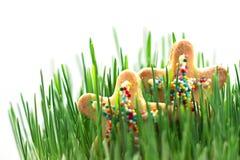 Étoiles lumineuses dans l'herbe juteuse Concept d'été vacances Photographie stock