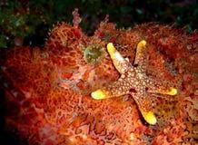 étrange rouge de poissons Photo stock