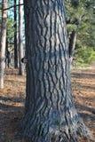 Étreignez un arbre images libres de droits