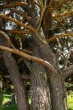 Étreindre des arbres photos libres de droits