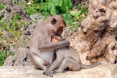 Étreindre le singe ; maman et son bébé Image libre de droits
