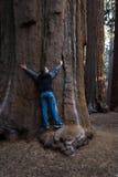 Étreindre un séquoia géant image libre de droits