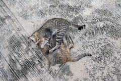 Étreinte de chat de couples avec amour, sur le plancher gris de mortier Photo stock