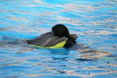 Étreinte de dauphin Photographie stock libre de droits