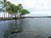 Étreinte de Lava Rock Cliffs l'océan de turquoise sur la grande île d'Hawaï Photos stock