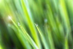 étroit d'herbe de gisement de rosée de profondeur Photos stock