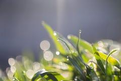 étroit d'herbe de gisement de rosée de profondeur photographie stock libre de droits