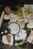 Étude botanique de vintage par une loupe images stock