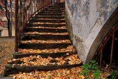 Étude d'automne avec une échelle Images stock
