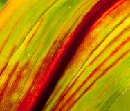 Étude des courbes en rouge et le vert Images libres de droits