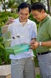Étude des oiseaux dans la cage Photo stock