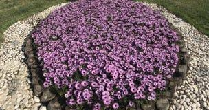 Études de aménagement fleurissantes en parcs et jardins Photo libre de droits