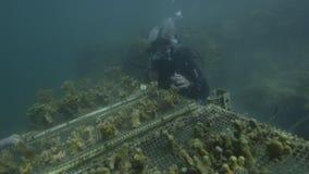 Étudiant des coraux sous l'eau banque de vidéos