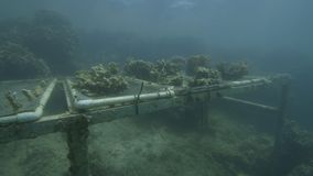 Étudiant des coraux sous l'eau clips vidéos