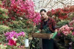 Étudiant masculin de joli jeune jardinier avec la coiffure à la mode tenant une boîte avec la fleur images libres de droits