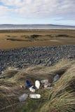 Évacuation des déchets ? Photos libres de droits