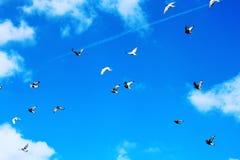 Évasion d'oiseau Photographie stock libre de droits