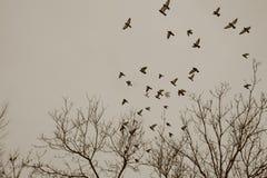 Évasion d'oiseaux au ciel Photos stock