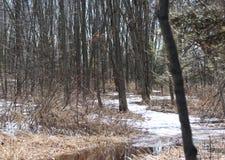 Évasion de région boisée Image stock