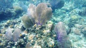Éventez le corail Images stock