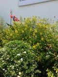 Évocations de jardin Photo stock