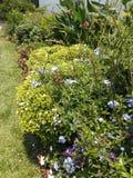 Évocations de jardin Images stock
