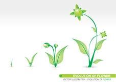 Évolution de fleur Images stock
