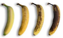 Évolution de la banane photographie stock libre de droits