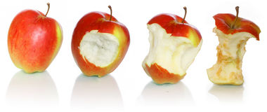 évolution de pomme Photo libre de droits