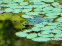 Être facile vert Photo libre de droits