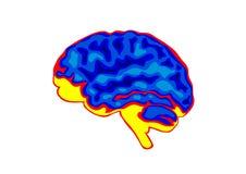 être humain de cerveau Images stock