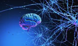 être humain du cerveau 3d Photos stock